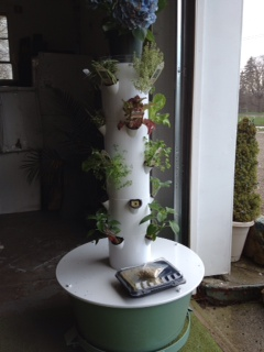 The Tower Garden at our store in May