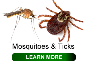 mosquitoes-and-ticks-click