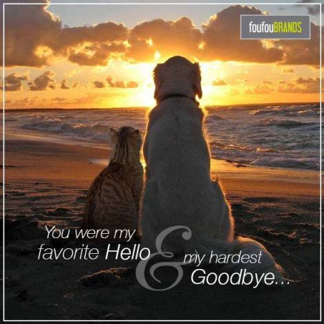 cat and dog hello goodbye